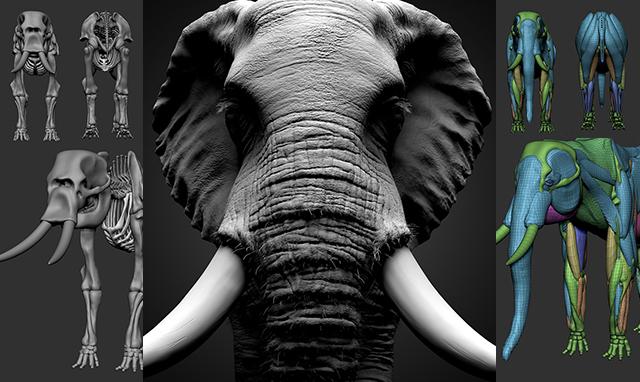 3dtotal.jp 日本語オフィシャルサイトCGでリアルな動物をつくるために :「アフリカゾウ」のスカルプト3dtotalの書籍や技術書をお探しなら